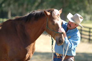 Horse Training involves Love